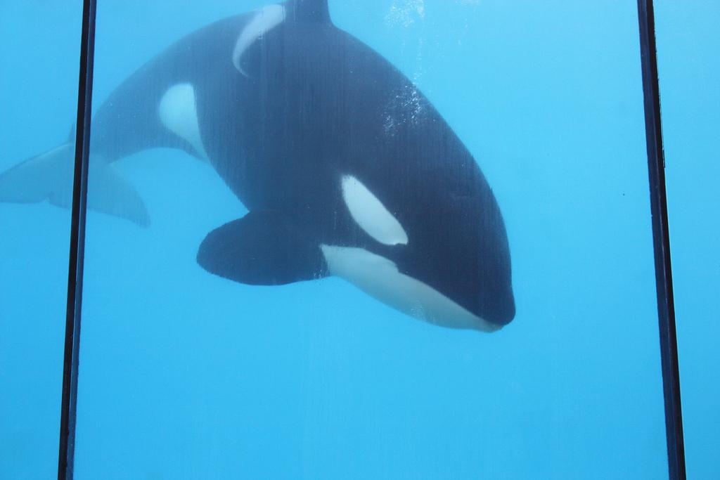 Rencontre avec les orques marineland