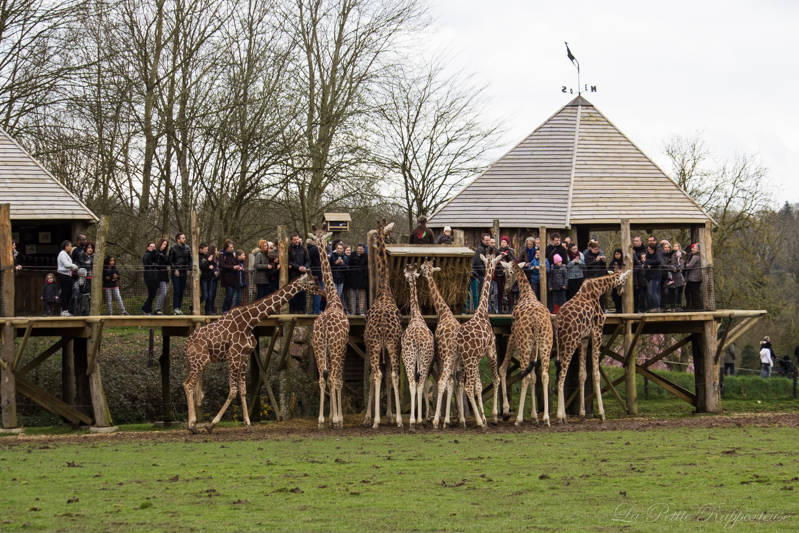 Repas des girafes