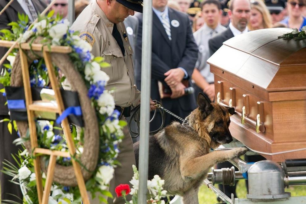 Figo, un chien policier du Kentucky, montre ses derniers respects à son partenaire humain, agent Jason Ellis, qui a été tué dans une embuscade cinq jours plus tôt.