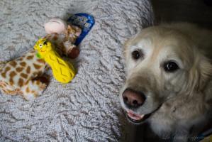 Elfie et sa DoggyBox