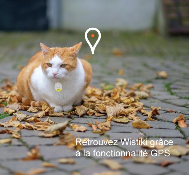 Wistiki : retrouvez votre chat